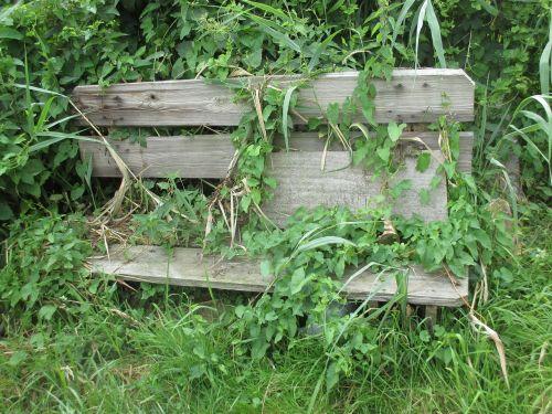 bankas,įsikabinti,žalias,laipiojimo augalai,užaugo,išnaudoti,kiek galima,medinis stendas,parkas,laukiniai,idiliškas,romantiškas