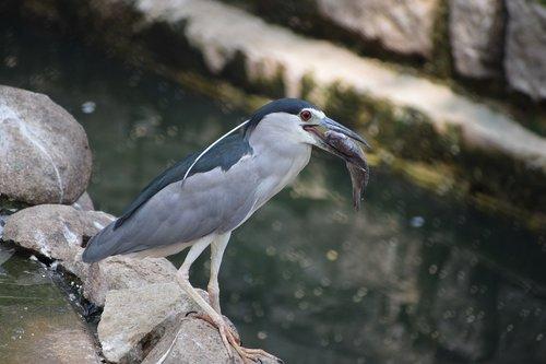 bannerghatta biological park  fish  bird