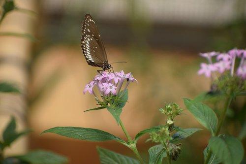 bannerghatta biological park  butterfly  nocturnal