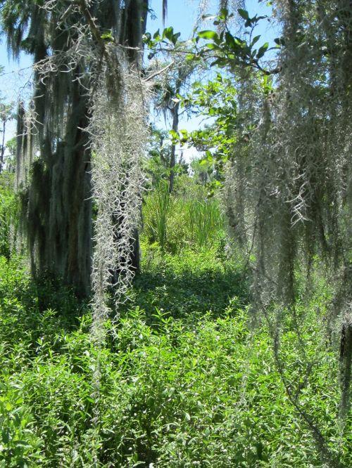 barataria swamp louisiana