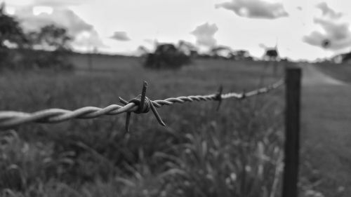 barb wire fence black and white