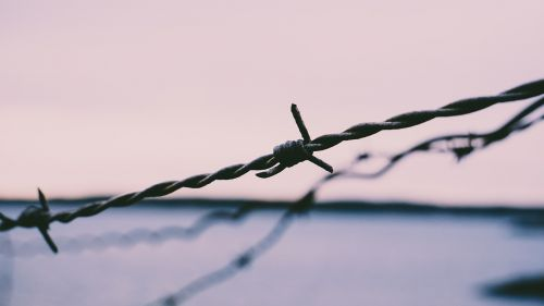 barb wires security sharp