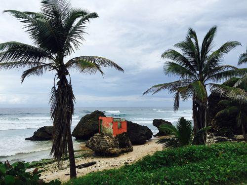 barbados beach tropic