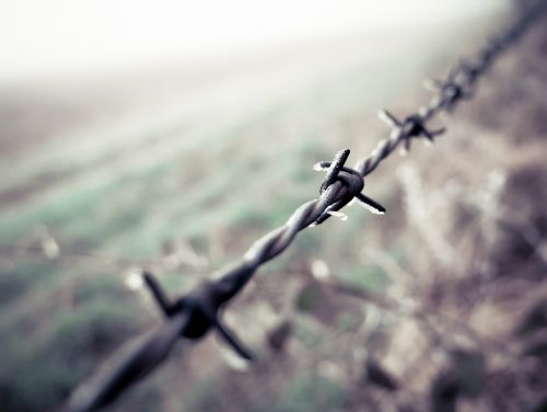 barbed wire field winter