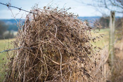 barbed wire straw grass