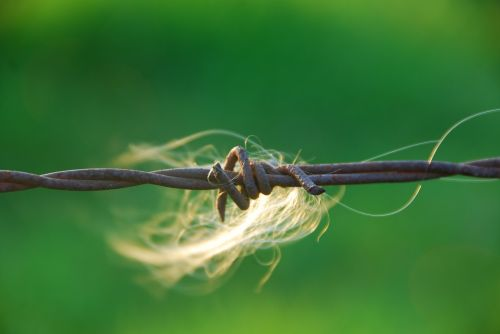 barbed wire close caught hair