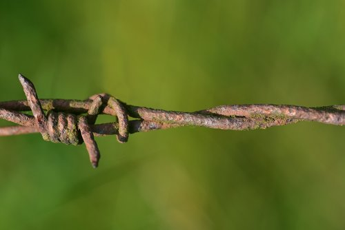 barbed wire  rust  fence