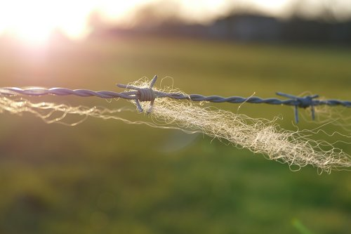 barbed wire  fence  wool
