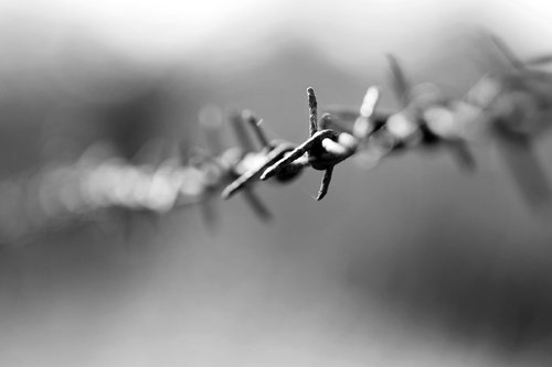 barbed wire  metal  fe