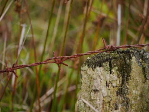 barbed wire stainless metal