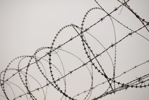 barbed wire this star pain