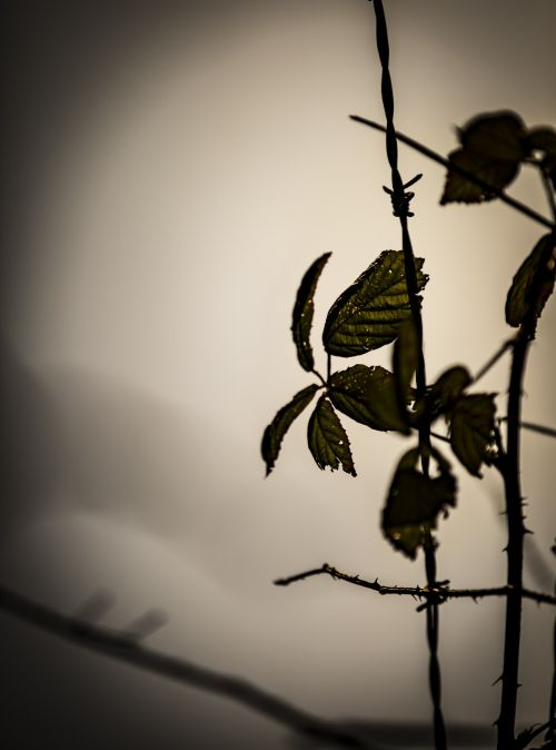 Barbed Wire And Leaves