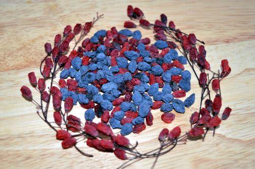 barberry mahonia berry