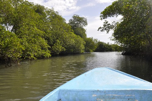 barca  beach  water mangrove forest in the dominican republic