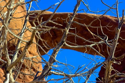 bare branches against arch  arch  desert