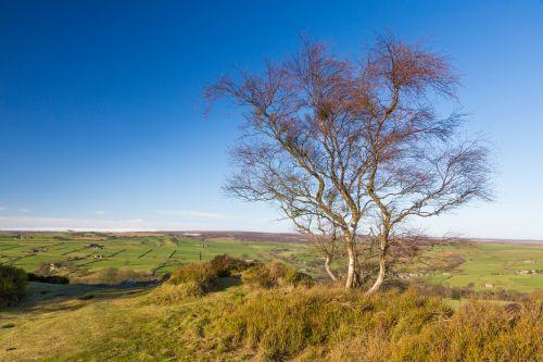 ruduo, plikas & nbsp, medis, mėlynas, filialas, diena, aplinka, žolė, kraštovaizdis, vienišas, lauke, augalas, sezonas, dangus, medžiai, plikas medis