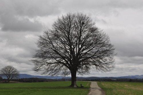 bare tree  lone bank  spring