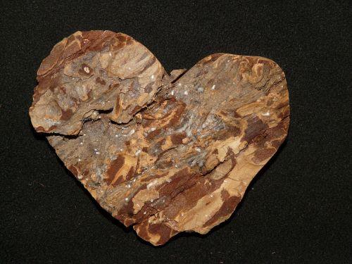 bark tree heart