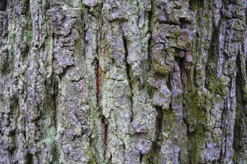 bark tree nature