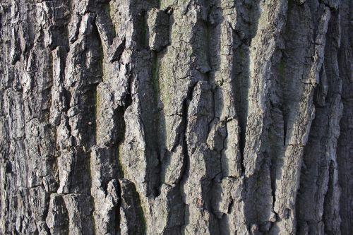 bark tree trunk