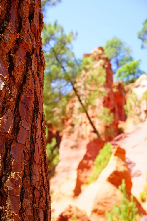 bark tree conifer