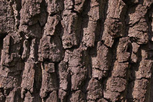 bark tree tree bark
