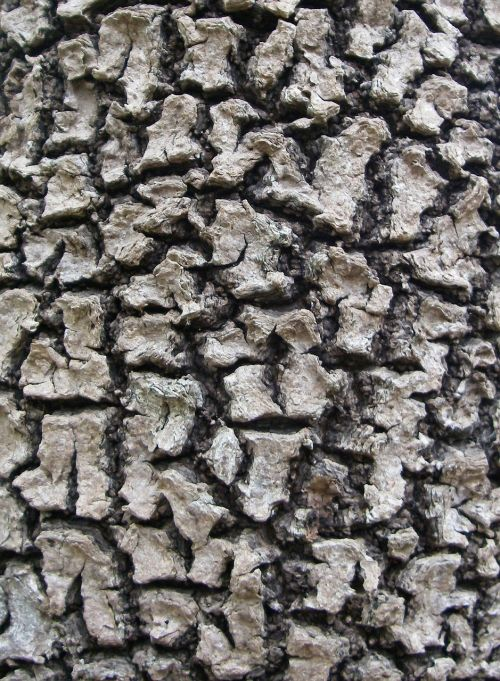 bark tree mangrove