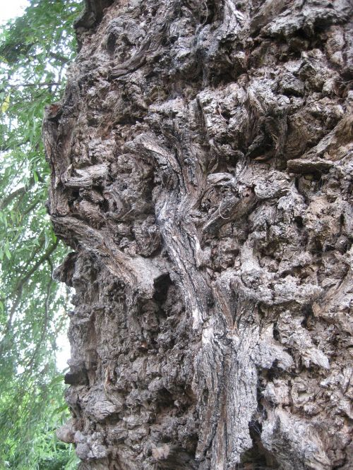 bark texture tree trunk