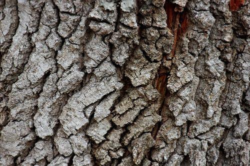 bark rau dry