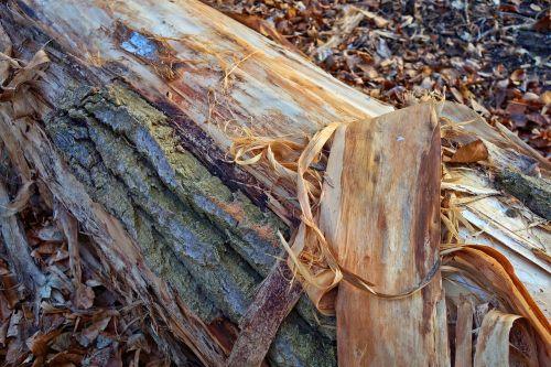 bark peeling shredded