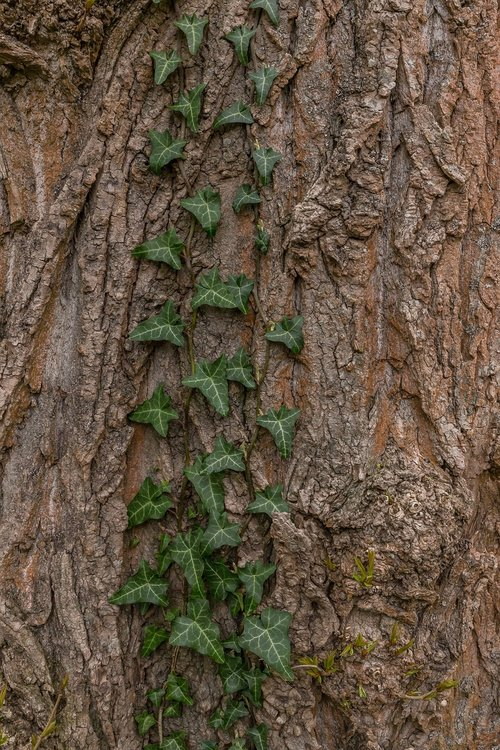 bark  tree  wood