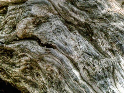 fonas, tapetai, žievė, medis, medis & nbsp, žievė, uždaryti & nbsp, gamta, modelis, tekstūra, realus & nbsp, medis, senas & nbsp, medis, medis & nbsp, grūdai, medis & nbsp, bagažinė, bagažinė, žievės fonas