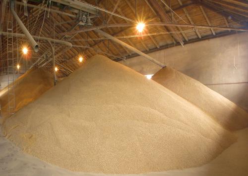 barley malt land