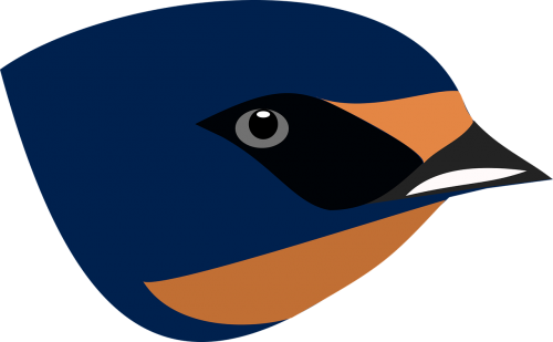 barn swallow face profile