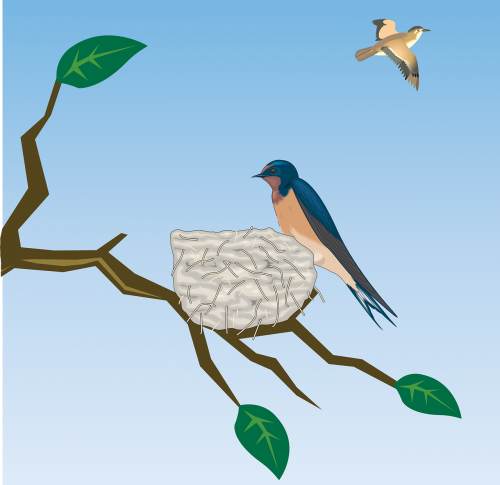 barn swallow schwalbe bird