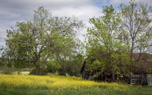 barns spring landscape