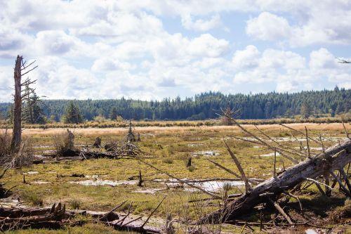 barren dead tree landscape