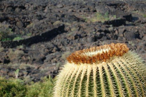 barren landscape karg cactus