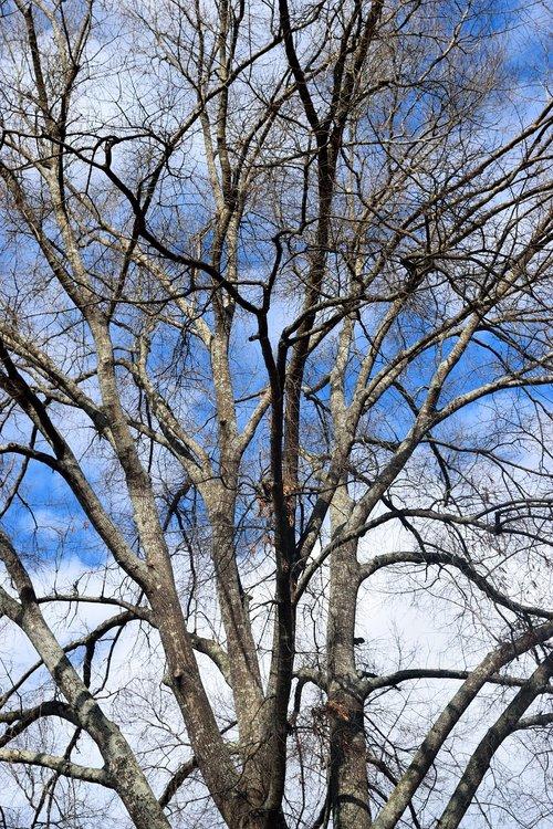 barren tree  winter  season