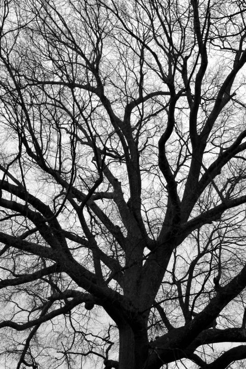Barren Tree At Winter Time