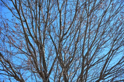 Barren Tree Background