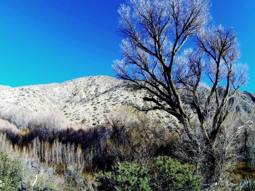 Barren Tree In The Desert