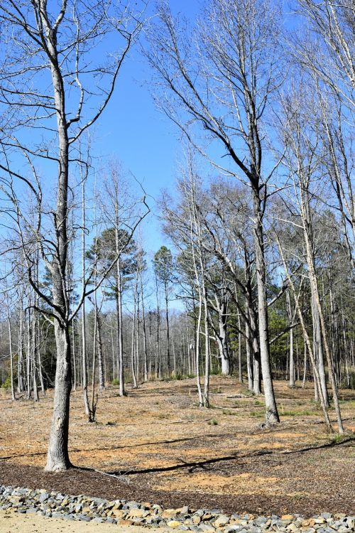 barren trees forest outdoors