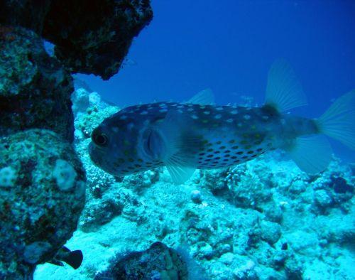 barrier reef ocean