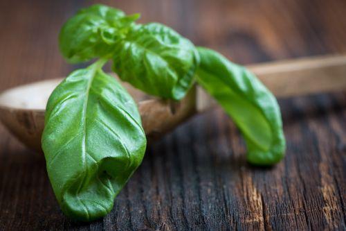 basil green frisch