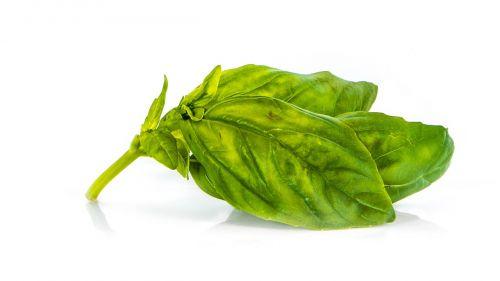 basil grass green