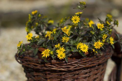 basket yellow flowers