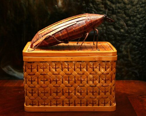 basket cockroach insect