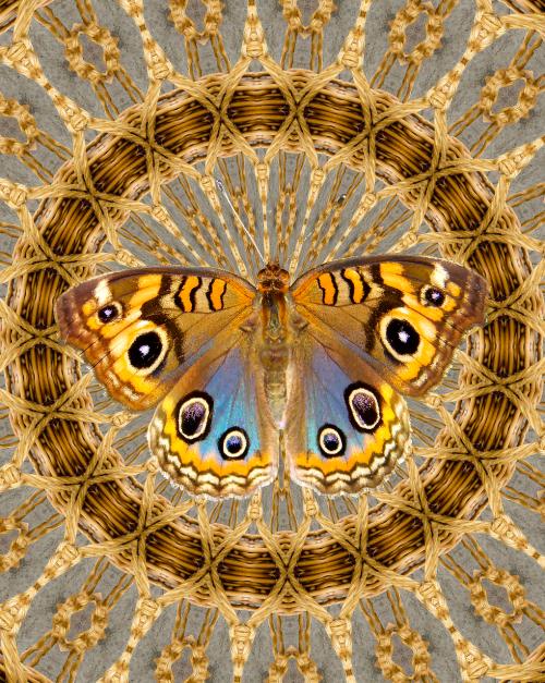 basket weave pattern butterfly decoration
