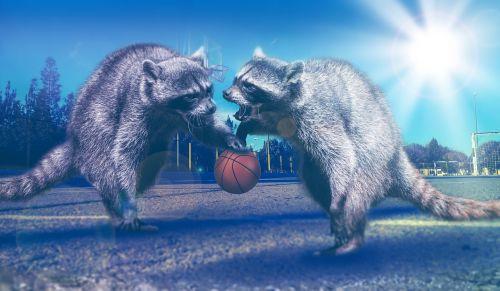 basketball sport play
